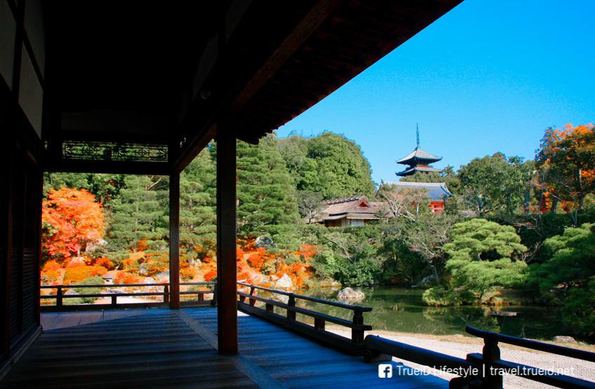 วัดนินนาจิ เกียวโต ใบไม้เปลี่ยนสี ญี่ปุ่น