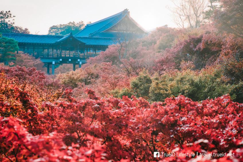 Tofuku-Ji Temple ใบไม้เปลี่ยนสี ญี่ปุ่น 2019