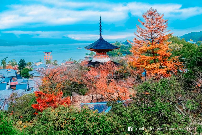 ฮิโรชิม่า ใบไม้เปลี่ยนสี ญี่ปุ่น 2019