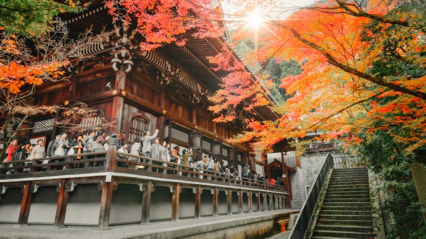 Eikan-do Temple ใบไม้เปลี่ยนสี ญี่ปุ่น 2019