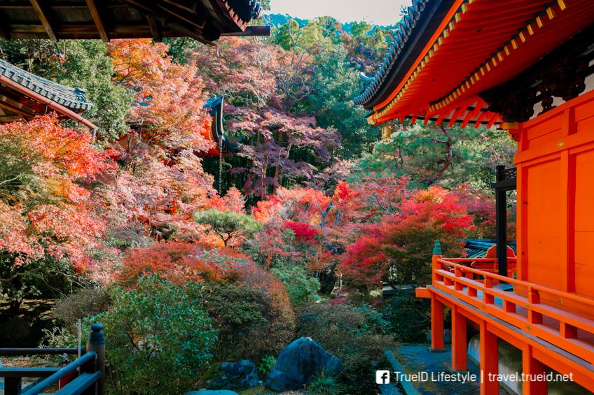 Bishamon-do Temple ใบไม้เปลี่ยนสี ญี่ปุ่น 2019