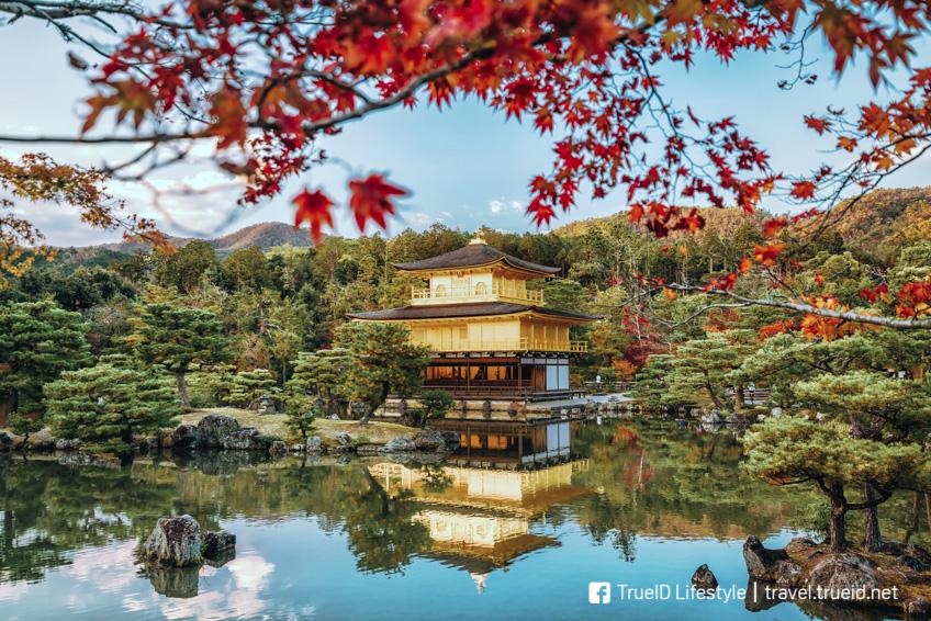 ปราสาทคินคะคุจิ ใบไม้เปลี่ยนสี ญี่ปุ่น 2019