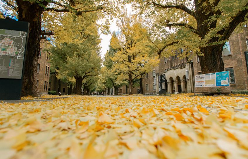 ใบไม้เปลี่ยนสี ญี่ปุ่น 2019 Tokyo University