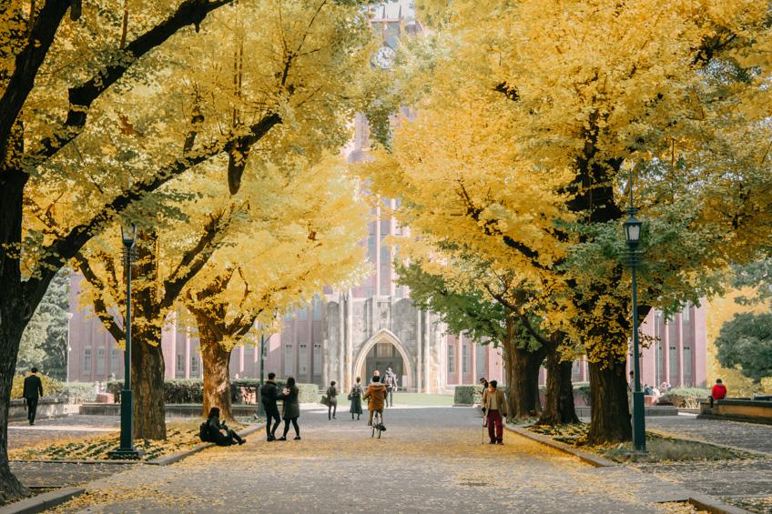Tokyo University ใบไม้เปลี่ยนสี ญี่ปุ่น 2019