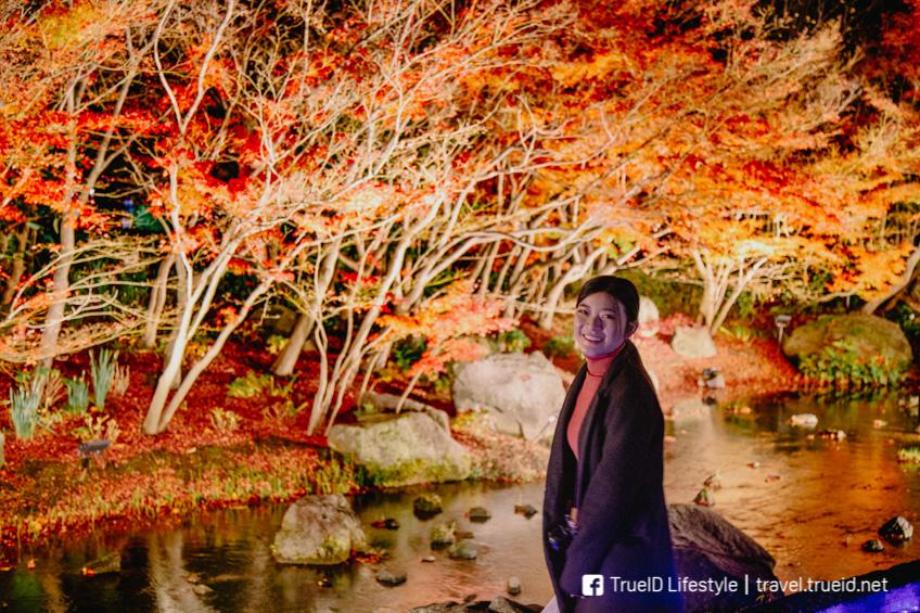 Nabana no Sato มิเอะ ใบไม้เปลี่ยนสี ญี่ปุ่น 2019