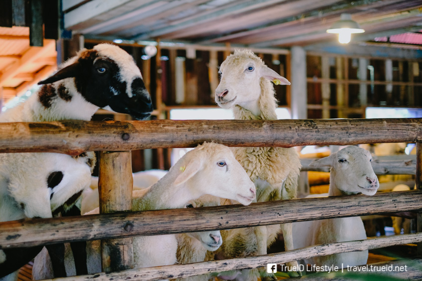 ที่เที่ยวราชบุรี The Scenery Vintage Farm