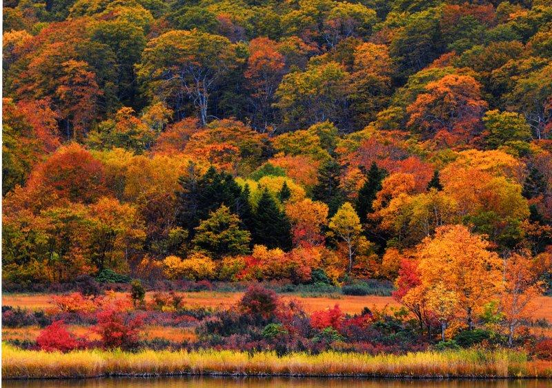 ใบไม้เปลี่ยนสี ที่ภูมิภาคโทโฮคุ ญี่ปุ่น