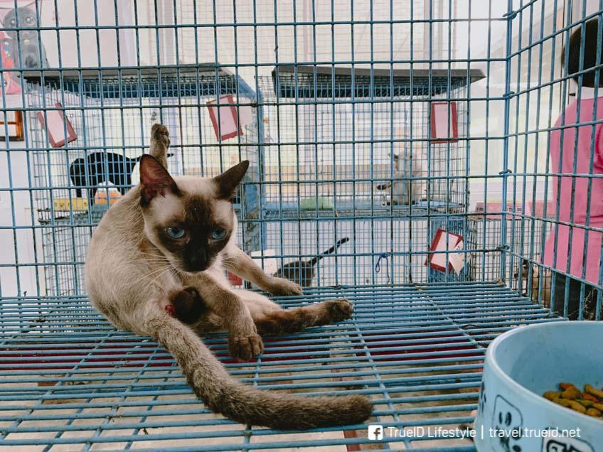 เราชอบน้องแมวไทยพันธุ์วิเชียรมาศ มากๆ  น้องน่ารัก แต่ก็แอบดูหยิ่งเบาๆ สมกับเป็นแมวสวยอ่ะนะ!