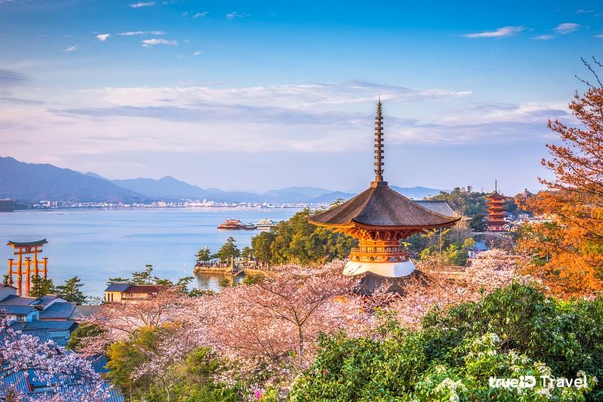 พยากรณ์ซากุระ ญี่ปุ่น 2020 ฮิโรชิมา