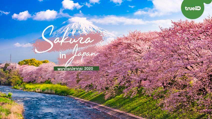มาแล้ว ! พยากรณ์ซากุระบาน ญี่ปุ่น 2020 เที่ยวฤดูใบไม้ผลิ ถ่ายรูปสวย