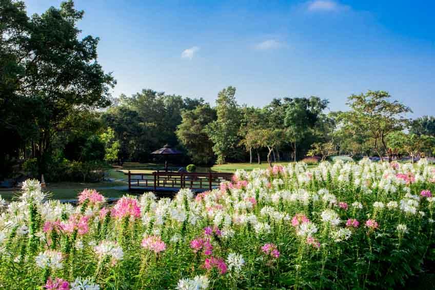 สวนหลวง ร.9 สวนสาธารณะในกรุงเทพ