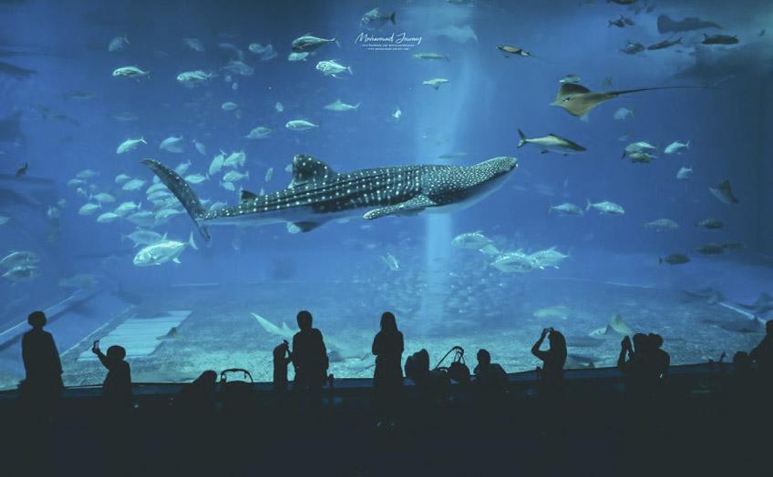 โอกินาว่า เที่ยวญี่ปุ่น Okinawa Churaumi Aquarium