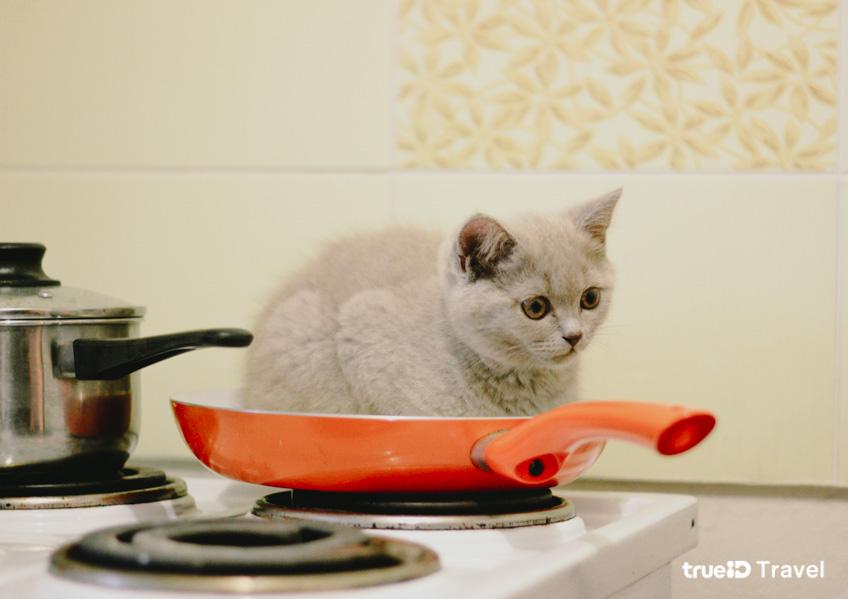 เซินเจิ้น ห้ามกินหมา ห้ามกินแมว ที่จีน