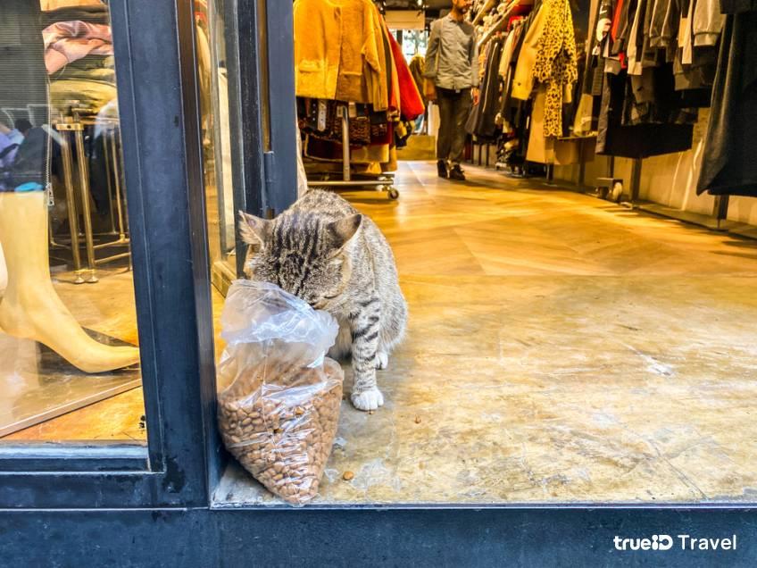รัฐบาลตุรกีร่วมใจ ช่วยแมวจรในอิสตันบูล