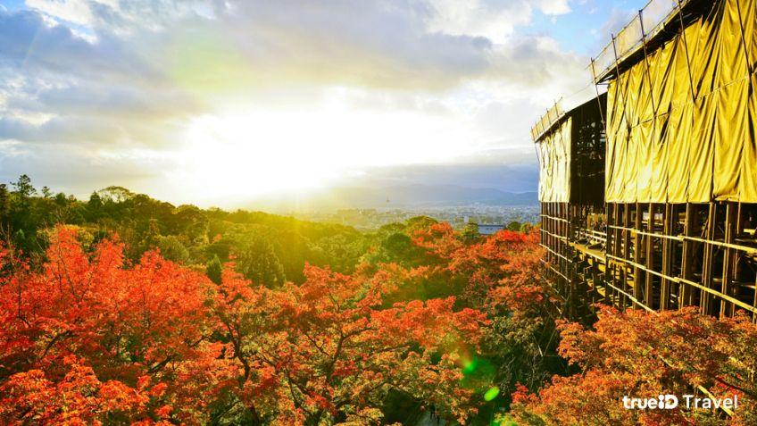 วัดน้ำใส คิโยมิสึ ประเทศญี่ปุ่น ระหว่างปิดบูรณะ