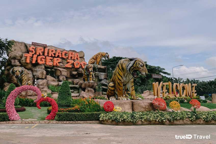 สวนเสือศรีราชา ที่เที่ยวชลบุรี ใกล้กรุงเทพ