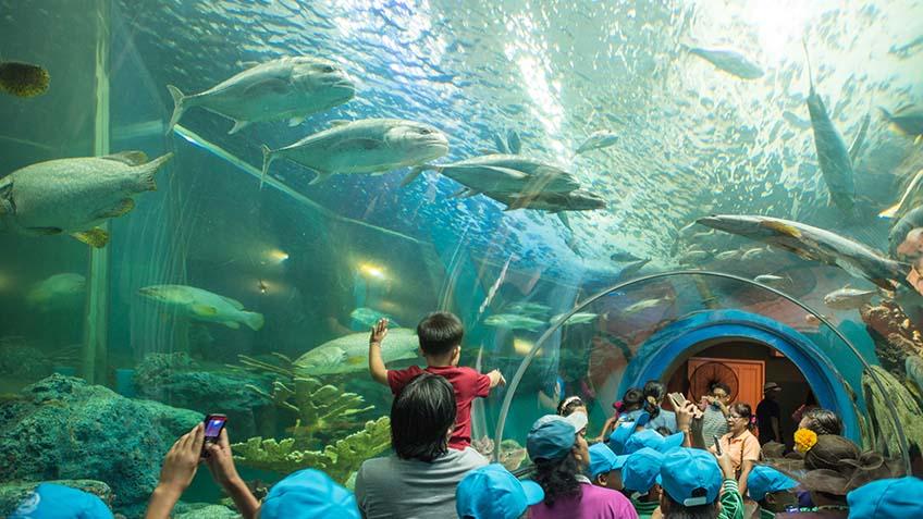 พิพิธภัณฑ์สัตว์น้ำ ระยอง
