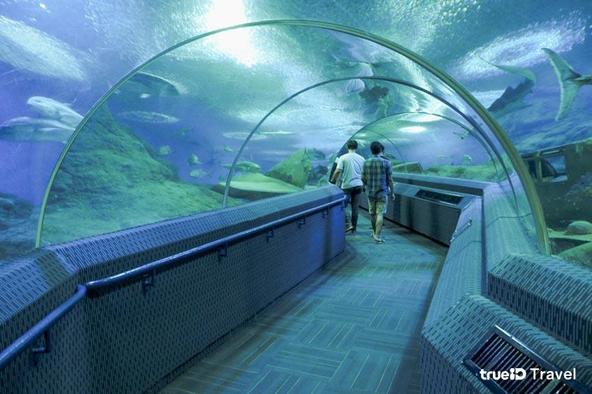 อควาเรียม Under Water World อุโมงค์ปลา พัทยา