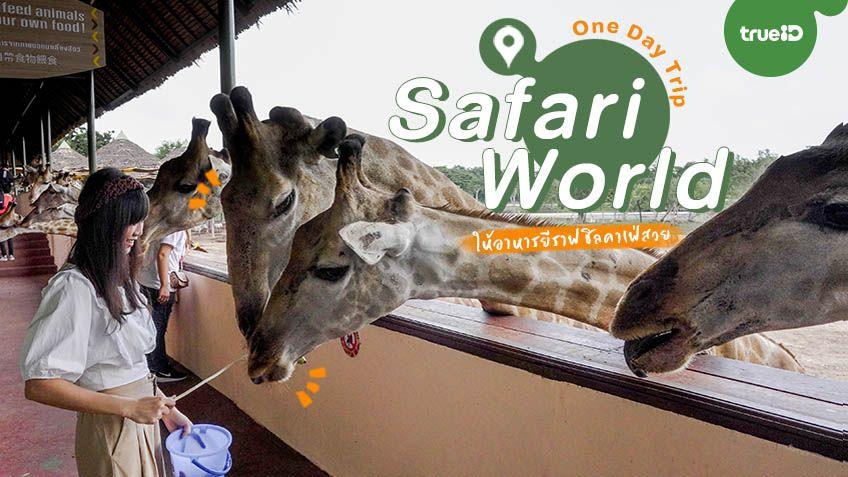 One Day Trip เที่ยวกรุงเทพ ปักหมุด สวนสัตว์ ซาฟารีเวิลด์  Safari World ให้อาหารยีราฟ ชิลคาเฟ่สวย