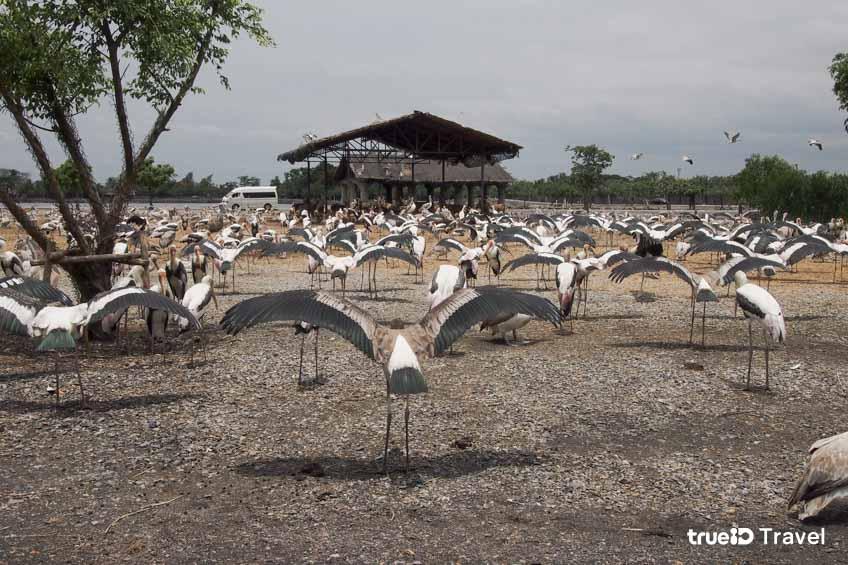 สวนสัตว์ในกรุงเทพ Safari World