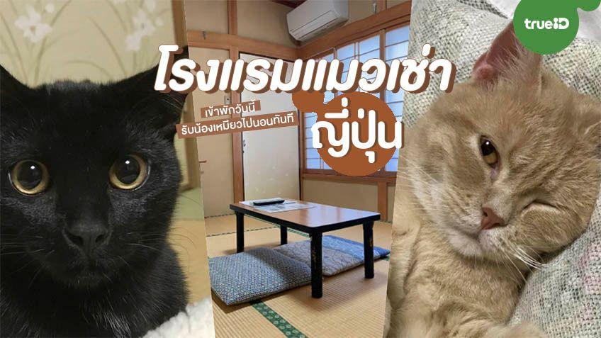 สะดุดรักยัยแมวเช่า! จองโรงแรมแมวเช่าที่ญี่ปุ่นวันนี้ รับทันทีน้องเหมียวไปนอนด้วย