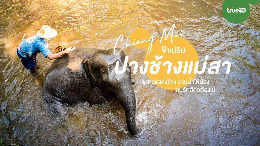 อาบน้ำน้องงงง ! ปางช้างแม่สา ที่เที่ยวแม่ริม เชียงใหม่ ดีต่อใจคนรักสัตว์