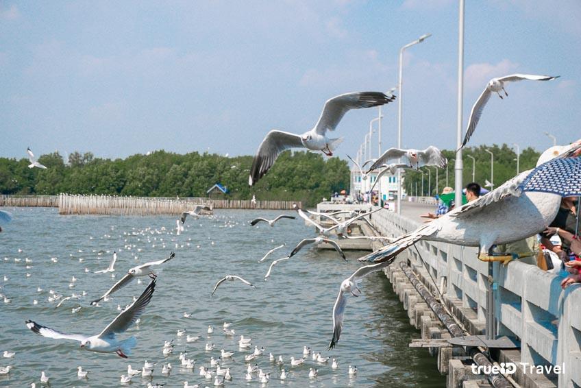 ที่เที่ยวสมุทรปราการ บางปู นกนางนวล