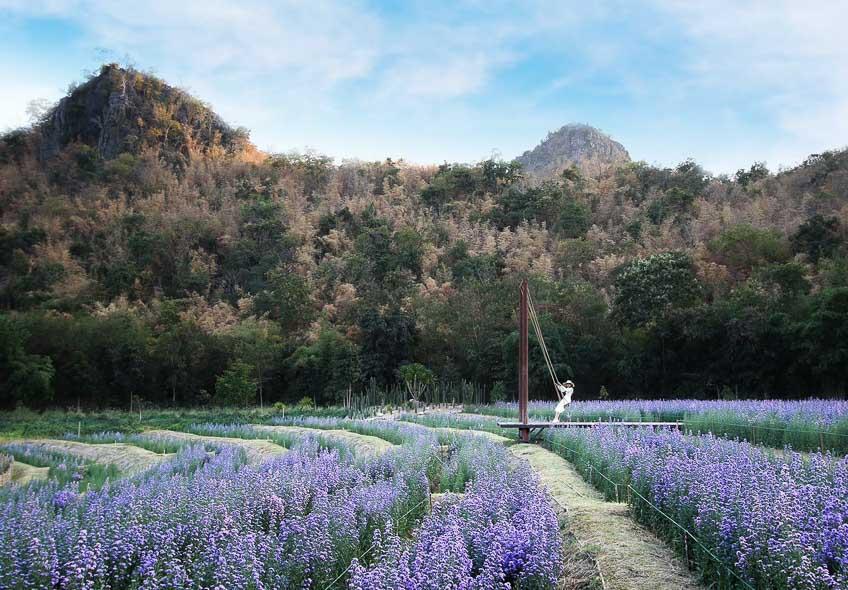 คาเฟ่ กาญจนบุรี The Village Farm To Cafe ที่เที่ยวกาญจนบุรี ทุ่งดอกไม้