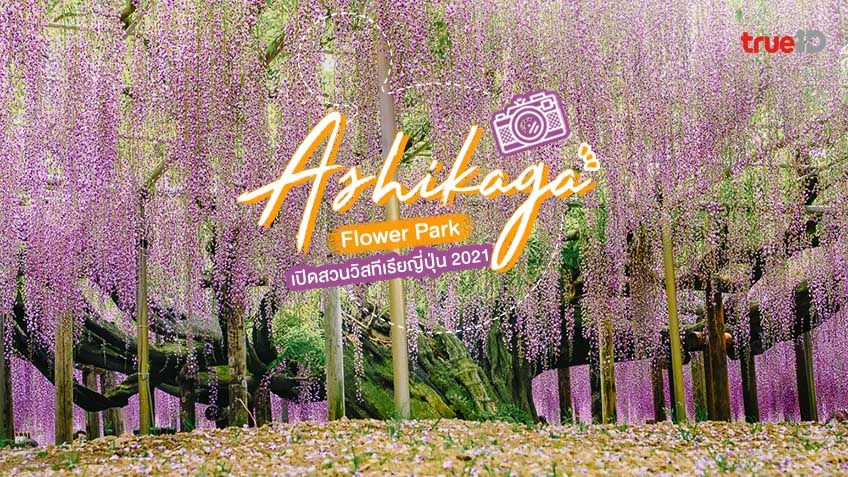 Ashikaga Flower Park สวนวิสทีเรียที่ญี่ปุ่น เปิดเข้าชมความสะพรั่งของปี 2021 แล้ว