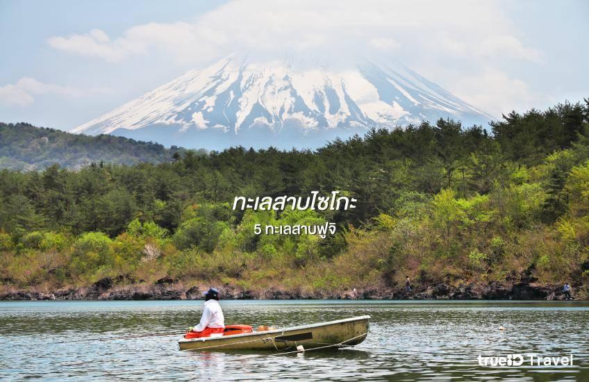 ทะเลสาบไซโกะ Lake Saiko ฟูจิ ที่เที่ยวญี่ปุ่น