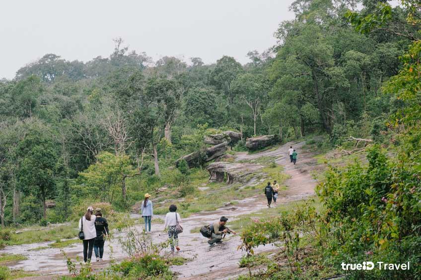 ที่เที่ยวหน้าฝน อุทยานแห่งชาติภูหินร่องกล้า  ที่เที่ยวพิษณุโลก
