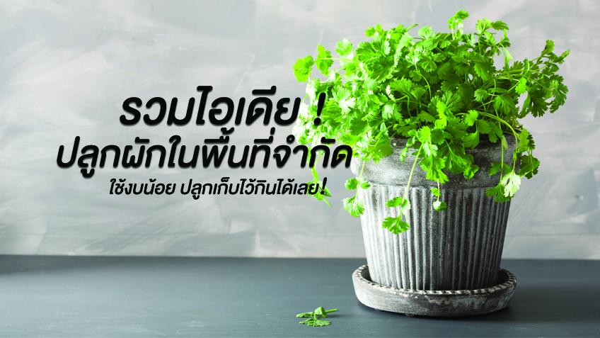 รวมไอเดีย ปลูกผักในพื้นที่จำกัด ใช้งบน้อย ปลูกเก็บไว้กินได้เลย!
