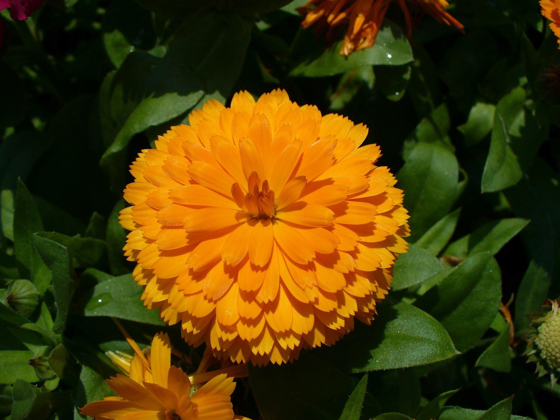 ดื่มแล้วดี! 5 ชาดอกไม้ ตัวช่วยสุขภาพดี ที่หลายคนยังไม่รู้