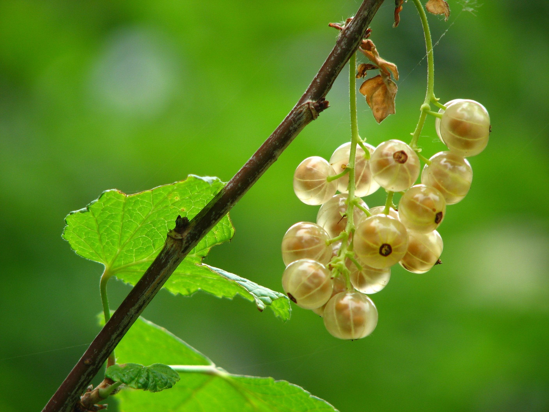 10 ผลไม้ที่อุดมด้วยวิตามินซี ช่วยลดสิว ผิวใส แถมมีประโยชน์ต่อสุขภาพ