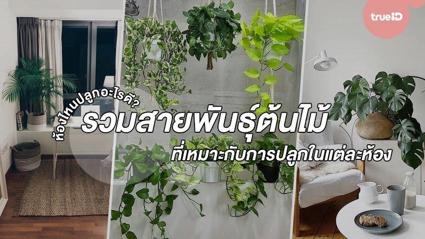 ห้องไหนปลูกอะไรดี? รวมสายพันธุ์ต้นไม้ฟอกอากาศที่เหมาะกับการปลูกในแต่ละห้อง